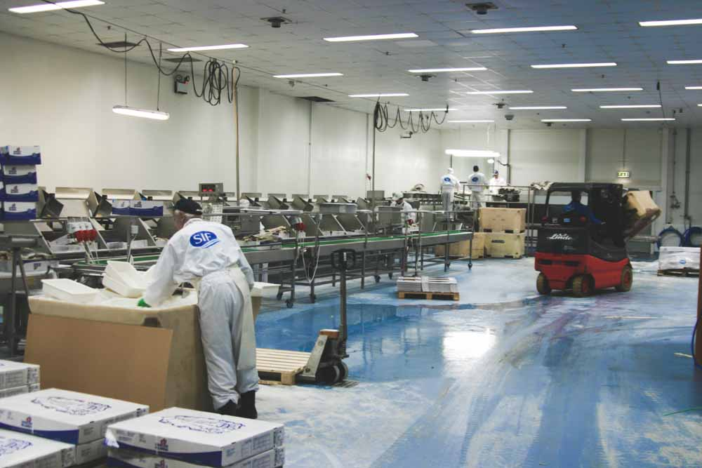 gulv i fiskeforedlingsindustri