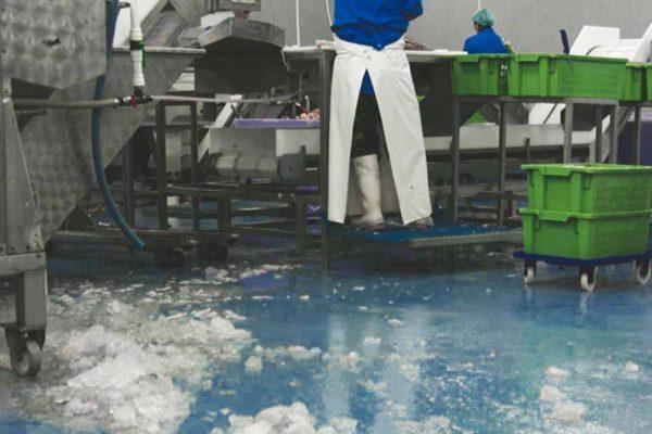 fiskehall gulv og is